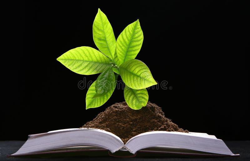 Crecimiento vegetal verde del libro fotos de archivo libres de regalías