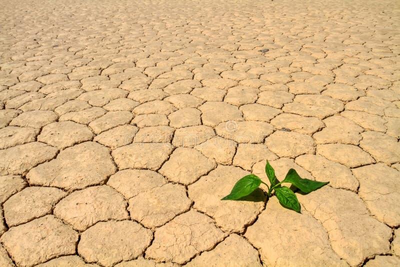 Crecimiento vegetal verde en la tierra agrietada del desierto imagenes de archivo