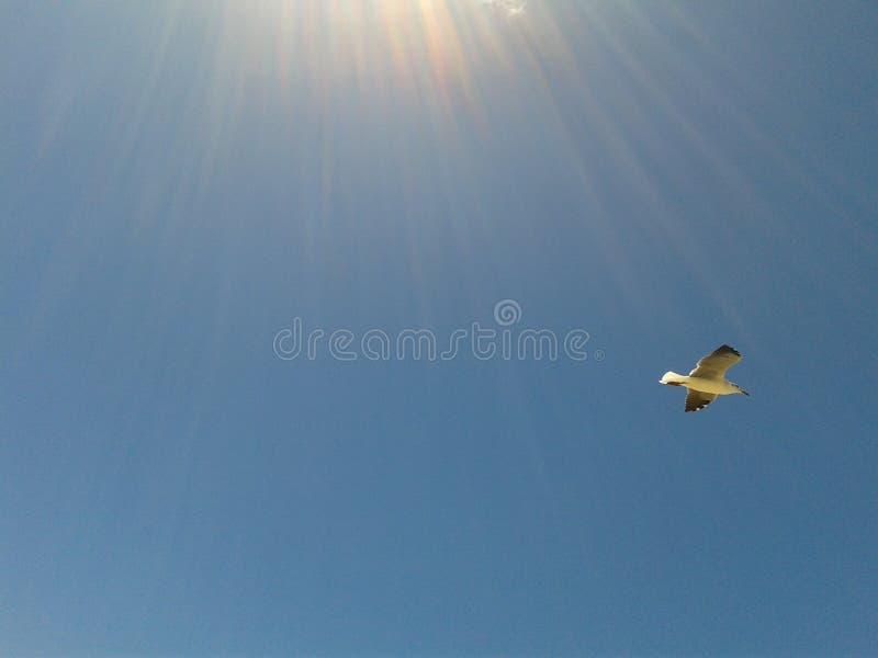 Credo che possa volare fotografia stock