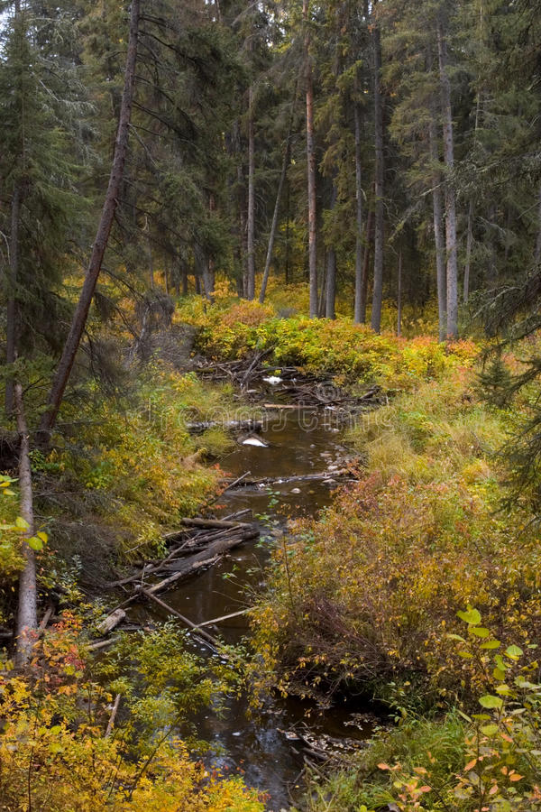 Download A creek stock photo. Image of relaxing, outdoor, season - 10808722