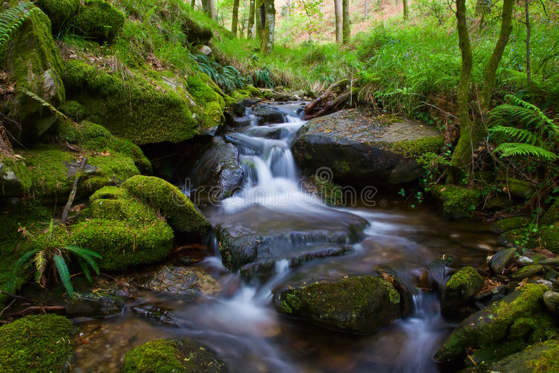 Creek. Small waterfall on a creek in the woods royalty free stock images