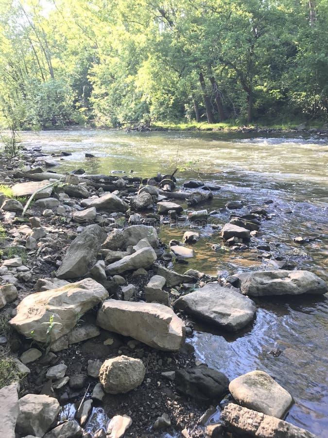 creek foto de stock royalty free