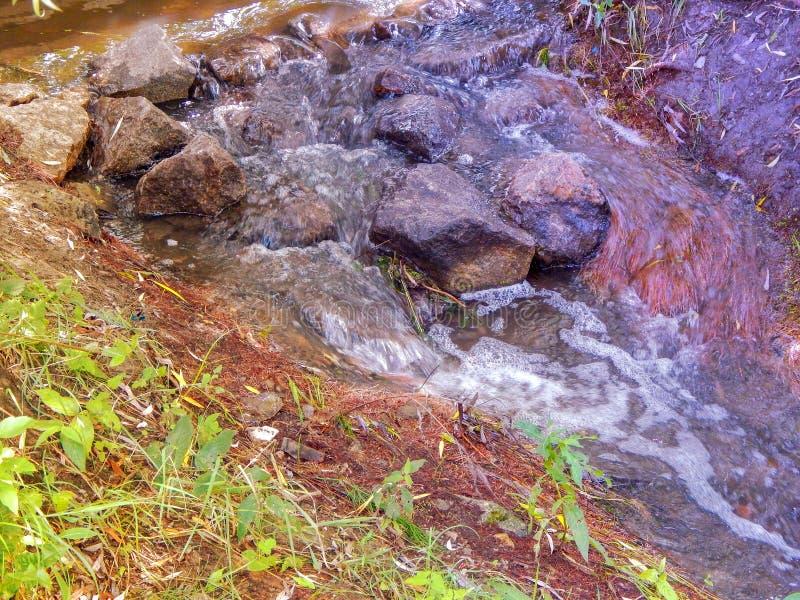 Creek com água fria corrente no verão fotografia de stock royalty free