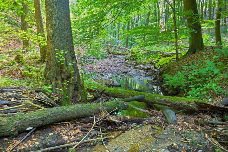 The Creek en el bosque de pequeñas colinas cárpatas fotografía de archivo libre de regalías