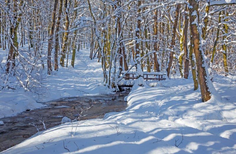 The Creek en el bosque en pequeñas colinas cárpatas - Eslovaquia del invierno fotografía de archivo