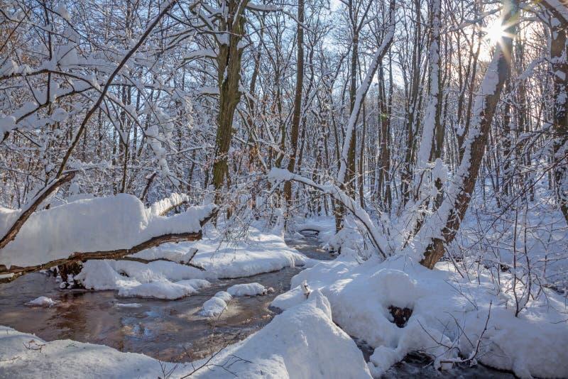 The Creek en el bosque en pequeñas colinas cárpatas - Eslovaquia del invierno fotos de archivo