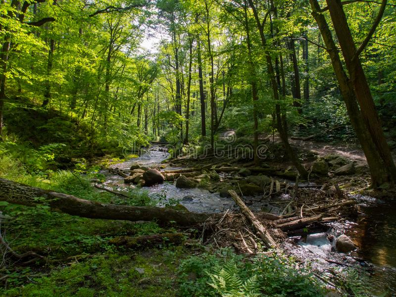 Creek Through Lush Forest, Worthington State Forest. A creek flowing through a lush forest in Worthington State Forest, New Jersey stock photography