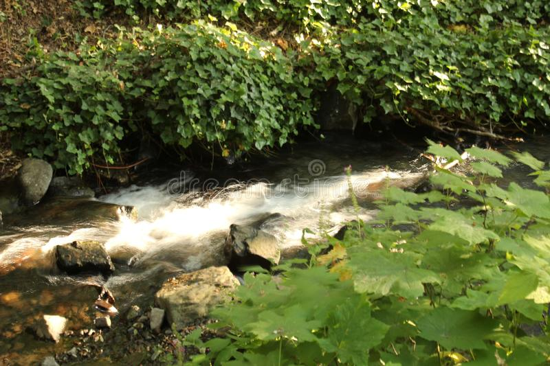 Creek. A creek flows through heavy green vines in the Pacific NW stock photography