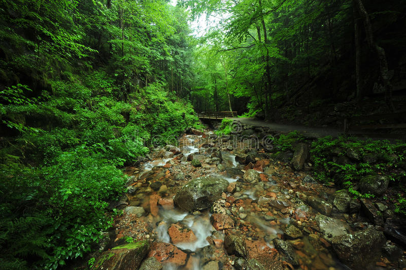 Download Creek in forest stock photo. Image of path, hamshire - 20830768