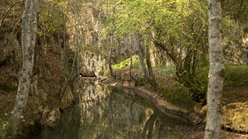 Landscape at Arcotete park, Chiapas, Mexico royalty free stock image