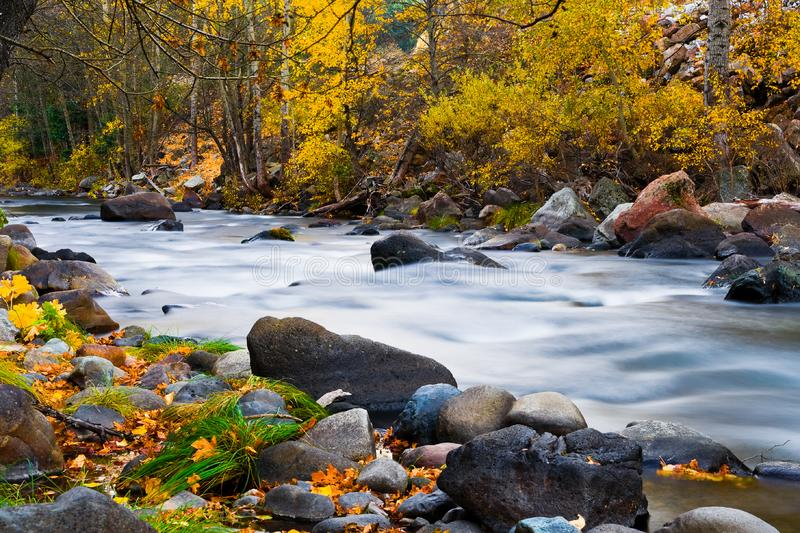 Creek in the forest in autumn royalty free stock photography