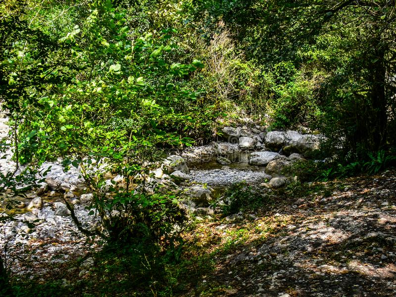 Creek in the green forest royalty free stock photo