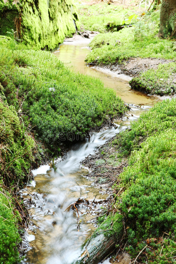 Download Creek and green shore stock photo. Image of side, natural - 5063598