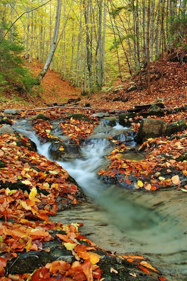 Free Creek In Autumn Stock Photo - 8490490