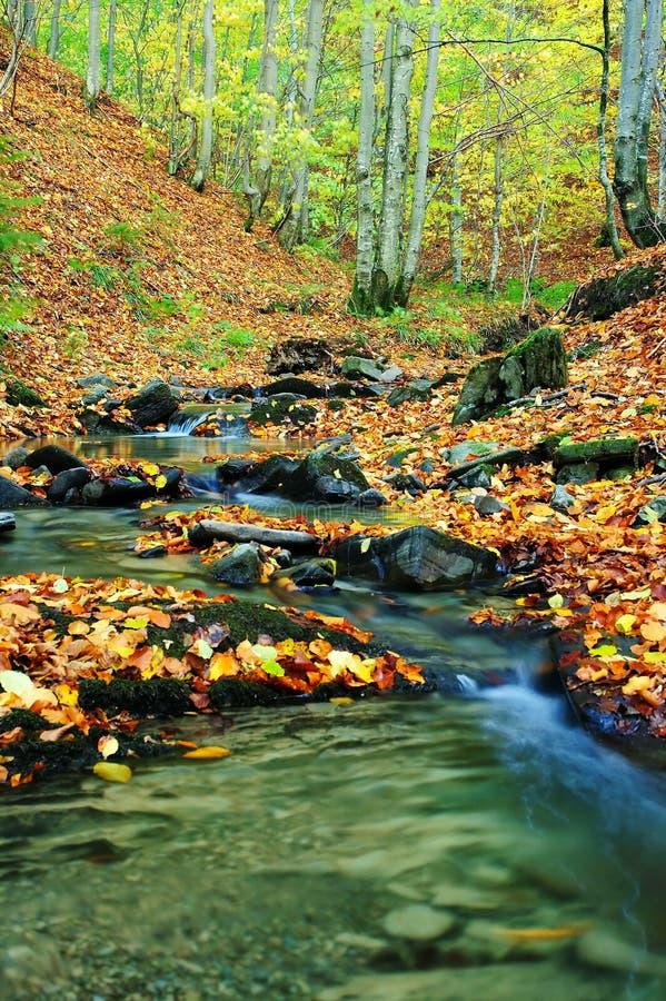Free Creek In Autumn Stock Photo - 9146930