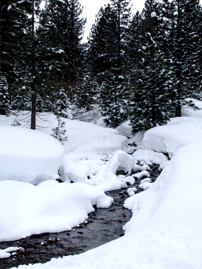 Free Creek In Wintry Forest Royalty Free Stock Photos - 4161808