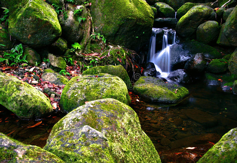 Download Creek In Jungle Of Hawaii Royalty Free Stock Photo - Image: 12947295