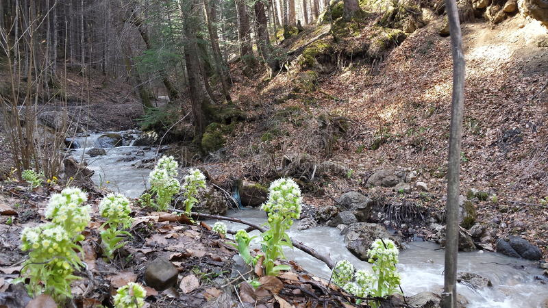 Creek in love. royalty free stock photos