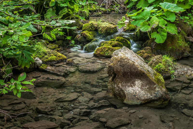 Creek And Lush Vegetation Royalty Free Stock Photos