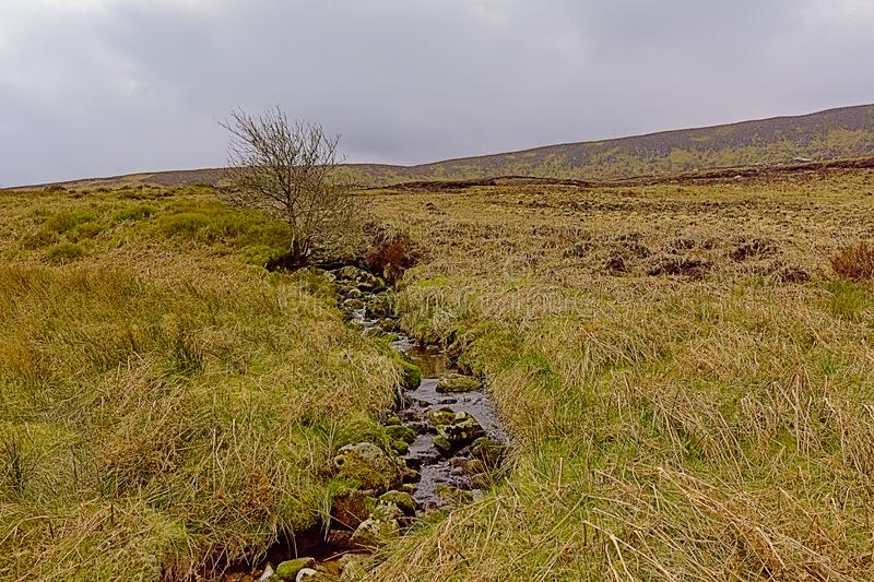 Creek and moorland vegetation in Wicklow mountains, IReland. Creek and moorland vegetation with high grass and single bare tree  in Wicklow mountains, Ireland stock photos
