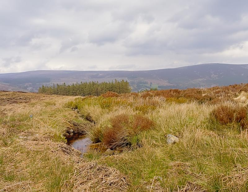 Creek and moorland vegetation in Wicklow mountains, Ireland. Creek and moorland vegetation with spruce forest and mountain peak in the background  in Wicklow royalty free stock photo