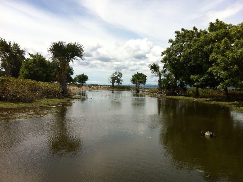 Creek Paradise stock photo