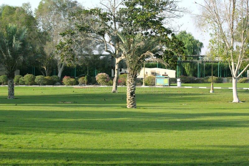 Creek Park, Dubai royalty free stock photo