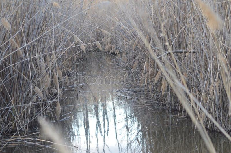 Creek. This is a photo of a little creek at Ernest L. Oros park royalty free stock photo