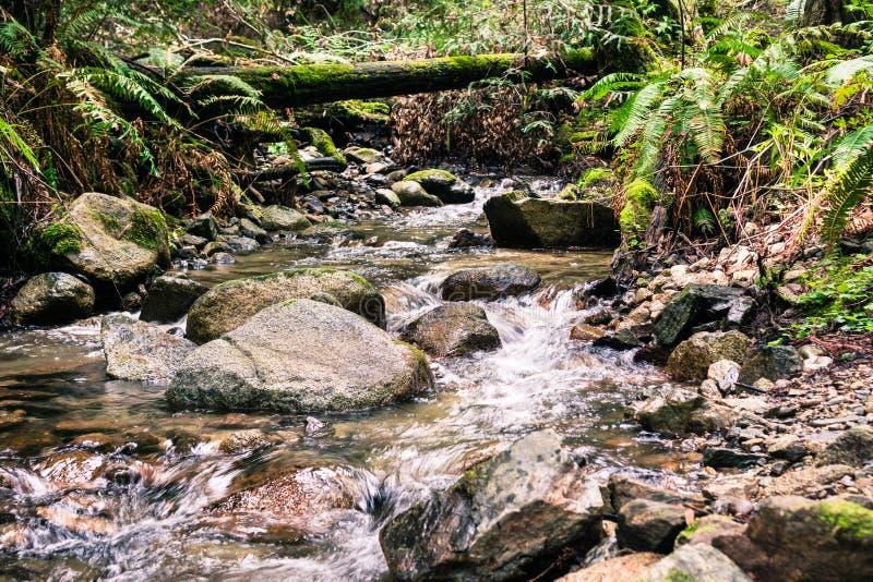 Creek running through the forests of Santa Cruz mountains, Felton, San Francisco bay area, California royalty free stock photo
