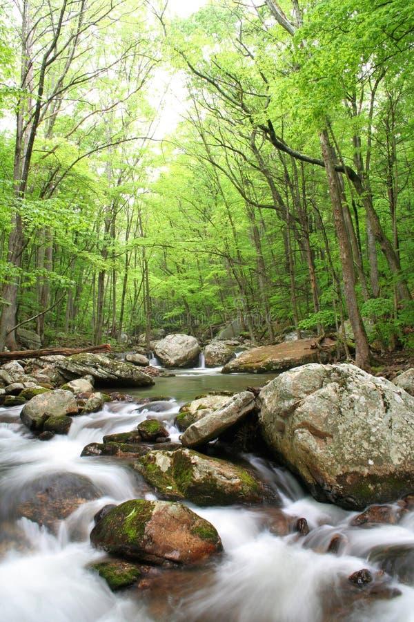 Download Creek during Spring stock image. Image of light, green - 14254349