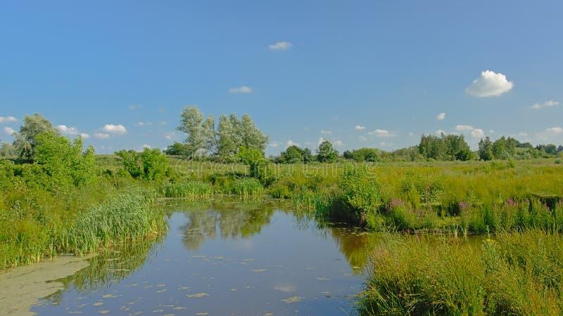 Creek through a sunny green field with trees in Kalkense Meersen nature reerve, Flanders, Belgium. Creek through a sunny green field with trees in Kalkense stock image