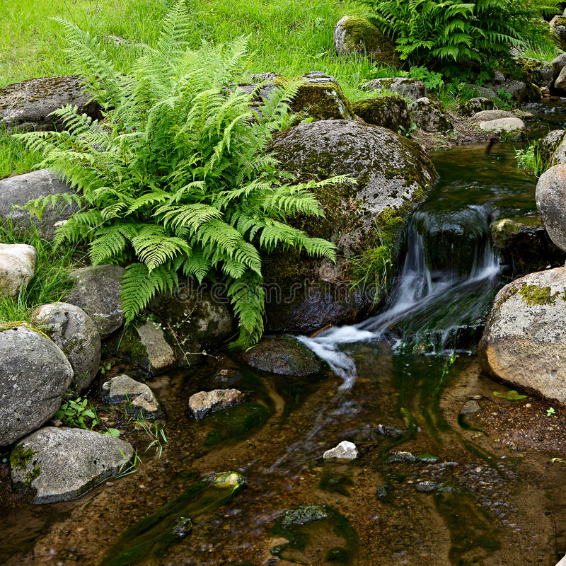 Download Creek In Tropical Forest Stock Image - Image: 25992411