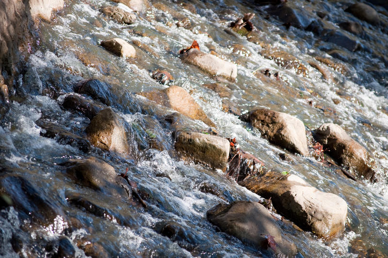 Creek water in motion royalty free stock photos
