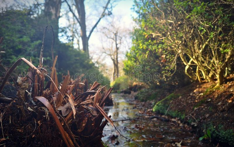 Small creek in the Richmond park stock images