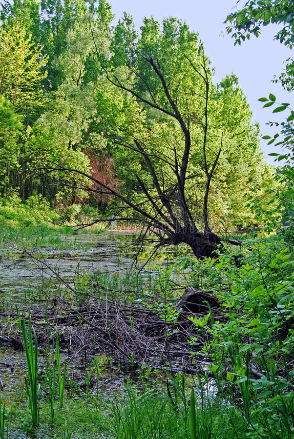 Download Creek In The Wood Stock Photo - Image: 37249300
