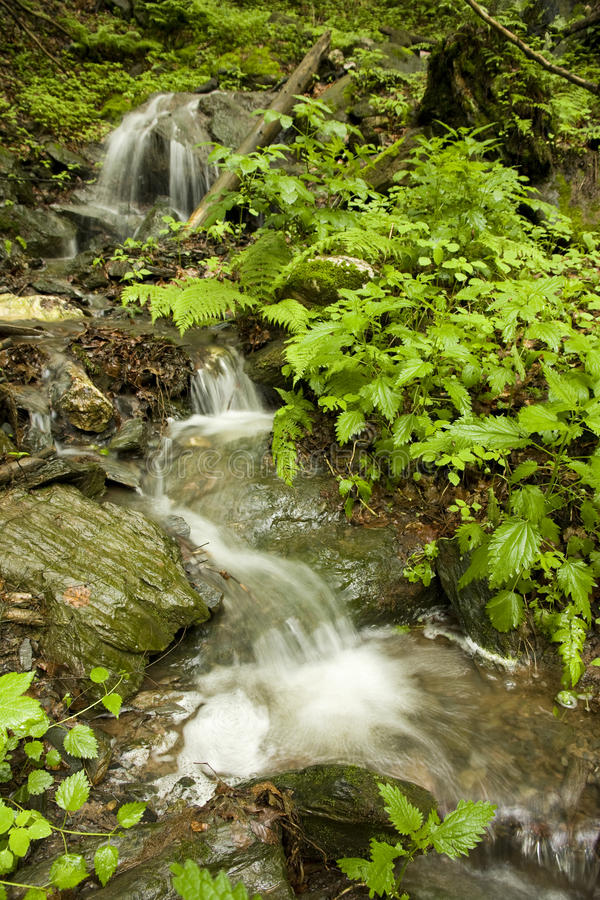 Download Creek in the woods stock image. Image of natural, boulders - 25279053