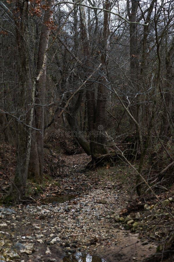 Creekbed asciutto fotografia stock libera da diritti