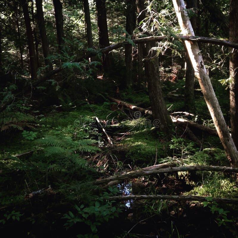 Creeks way. School trails 1 stock photos