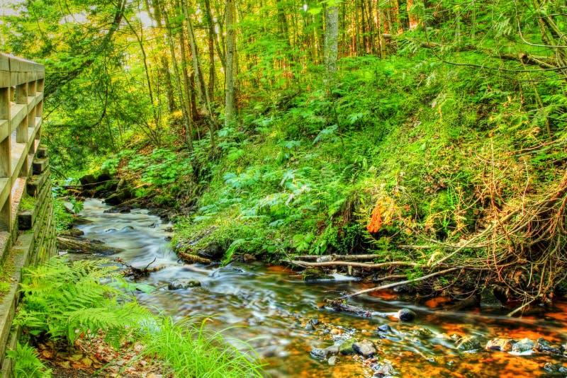 Creekside stockbilder