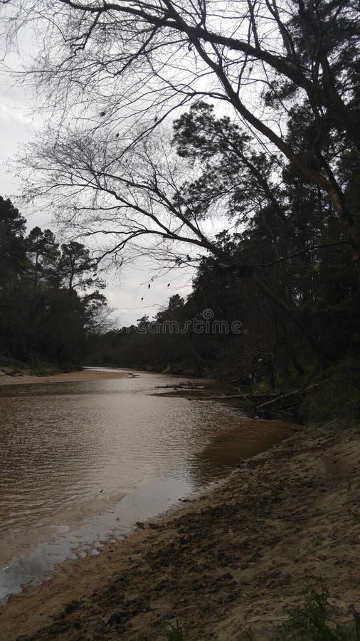 creekside royaltyfri fotografi