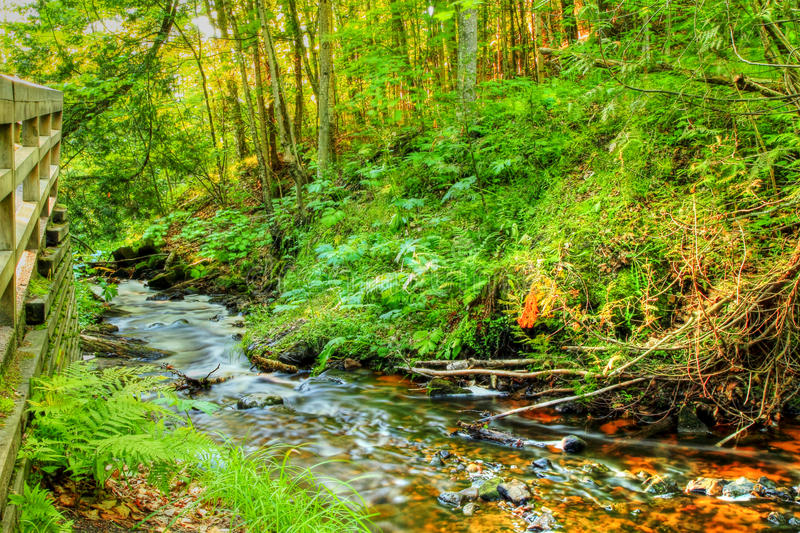Creekside. Babbling stream travels through a lush woodland on it s way to Lake Superior Pictured Rocks National Lakeshore Munising, Michigan stock images