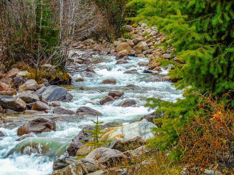 Creekside Yellowhead śladu góry Robson prowincjonału park zdjęcia stock