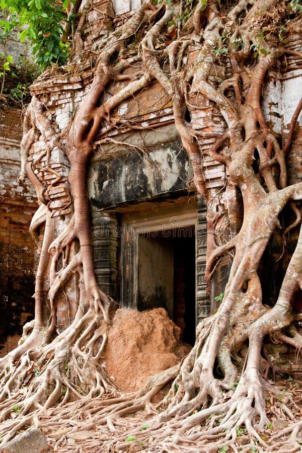Free Creeper Vine Temple Stock Image - 28397231