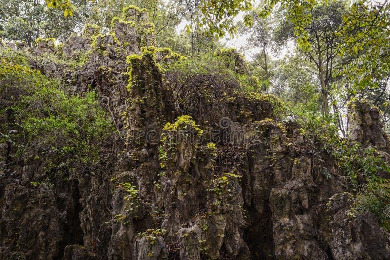 Creepers на rockery в зелёной весне стоковая фотография
