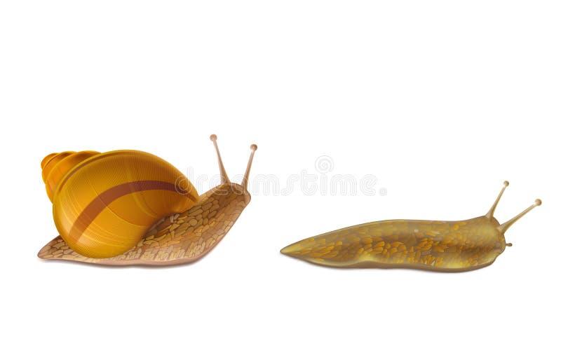 snails and slugs snail sea snail slug clipart - Snails And Slugs, Snail,  Sea Snail, transparent clip art