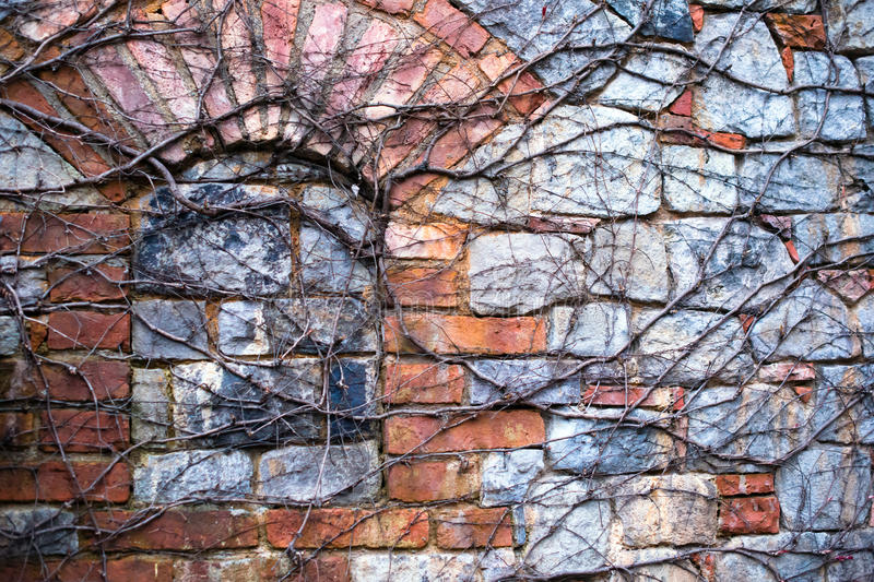 Creeping vine grapes braided stone brick wall with window laid d royalty free stock image