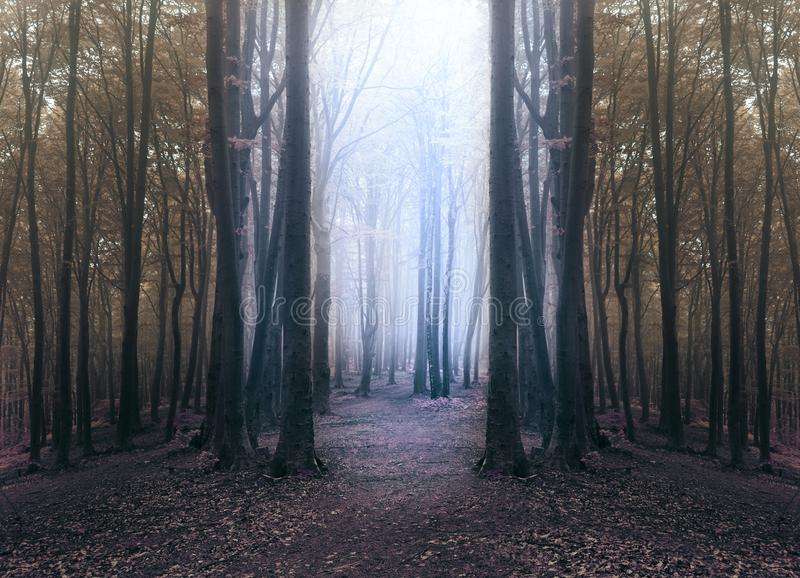Creepy blue light in foggy forest with circle of dark trees royalty free stock photography
