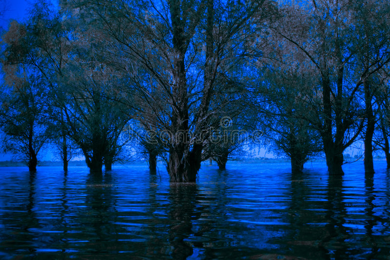 Creepy Cold Blue Danube Delta Flooded Forest stock photos