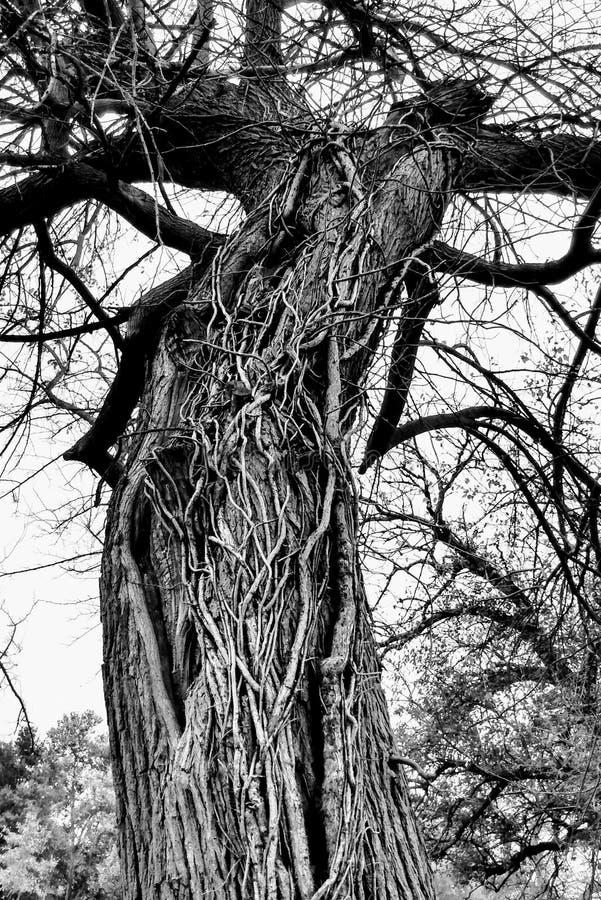 Creepy Dendrologia fotografie stock libere da diritti