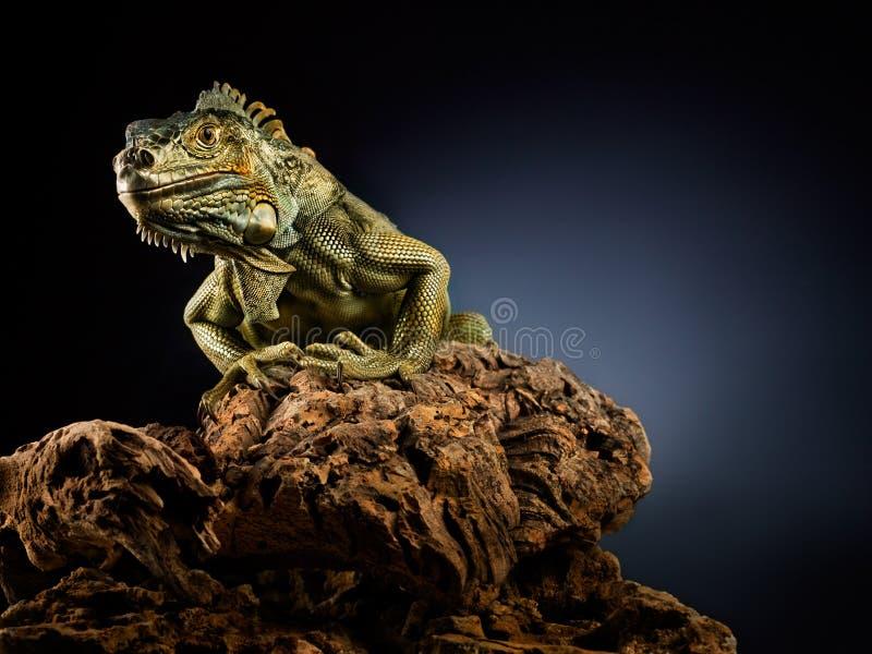 Download Creepy Dragon. Royalty Free Stock Photos - Image: 14105008